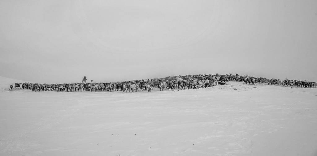 4Haiyan Huang_Nomadic Reindeer Herders8_FIAP Ribbon_PPSA_Projected Digital Images Open Monochrome