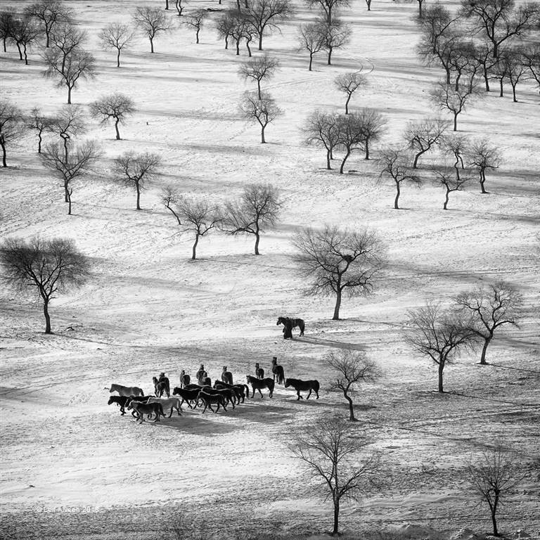 Leif Alveen – Horses and Trees 127 – Photo Travel