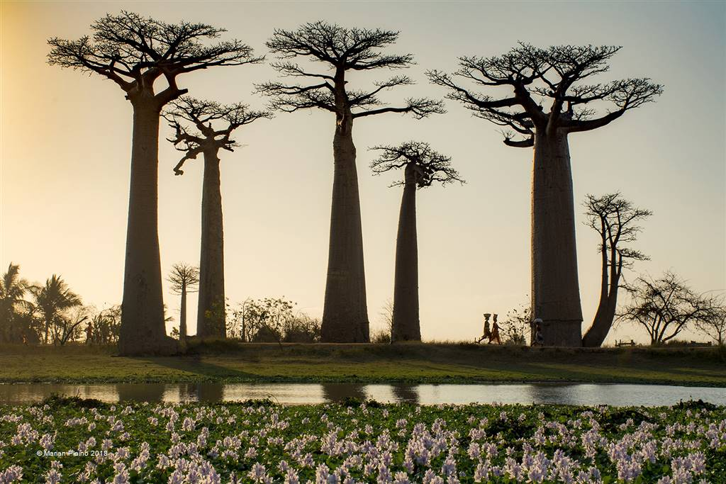 Marian Plaino – Madagascar – Photo Travel