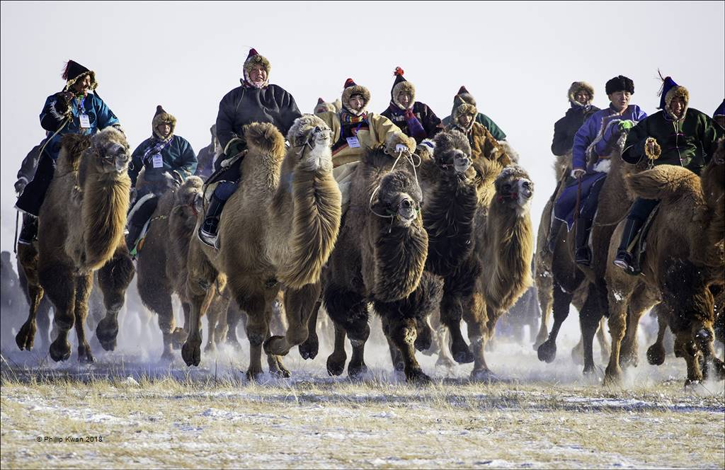 Phillip Kwan – Camel Race 83 – Photo Travel