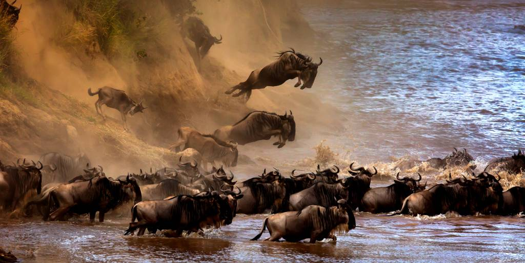 Sergey Agapov - The Great Migration of Wildebeest 2 - Bekkalokket Photoclub Ribbon
