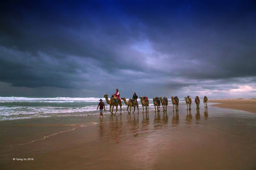 Yiping Xu – Camel by the Sea – Photo Travel